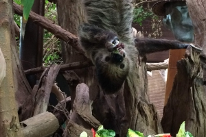 Familientag im Zoo 2015